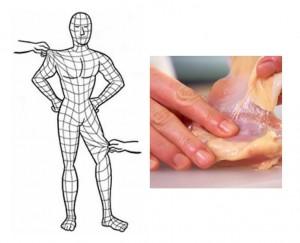 筋膜イラスト